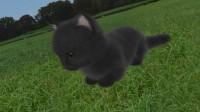 aabs_animals_1080644945.jpg